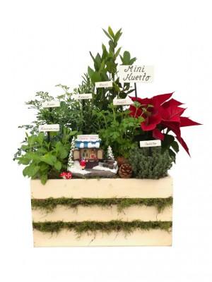 Mini huerto navideño de 6 aromáticas
