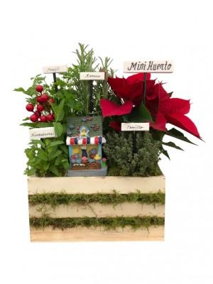 Mini huerto navideño de 4 aromáticas