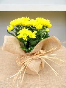 01 Crisantemo Amarillo M12 Arpillera