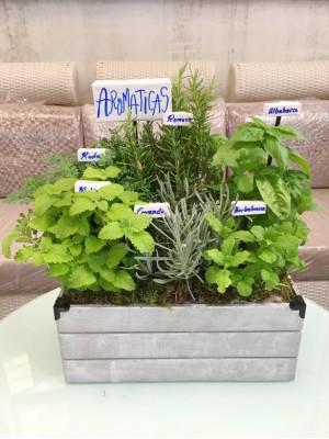 1 Mini huerto de aromaticas