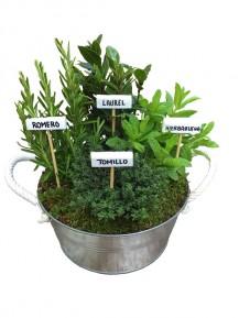 Mini huerto de aromaticas laton