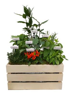 Mini huerto de siete plantas