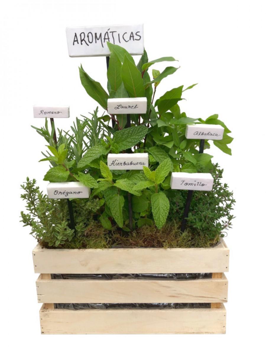 Mini huerto de aromáticas variadas