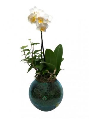 Mini orquídea en cristal