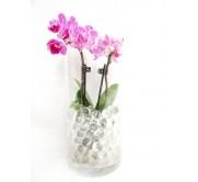 Mini orquidea con gel