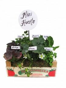 Mini huerto de seis culinarias