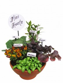 Mini huerto de cinco plantas