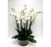 1 Centro de 5 orquideas de 2 varas en cristal