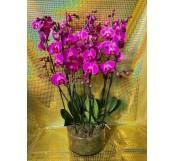 orquideas morada vaso cristal