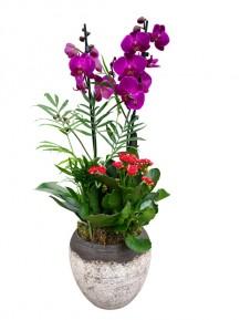 Cesta de orquidea con plantas variadas