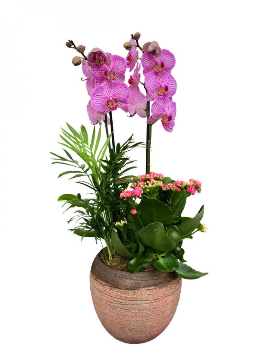 Maceta de cerámica con orquídea rayada y plantas variadas