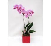 1 orquidea 2 varas