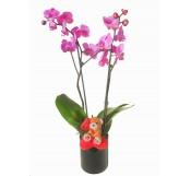 orquidea 2 varas en cristal San Valentin