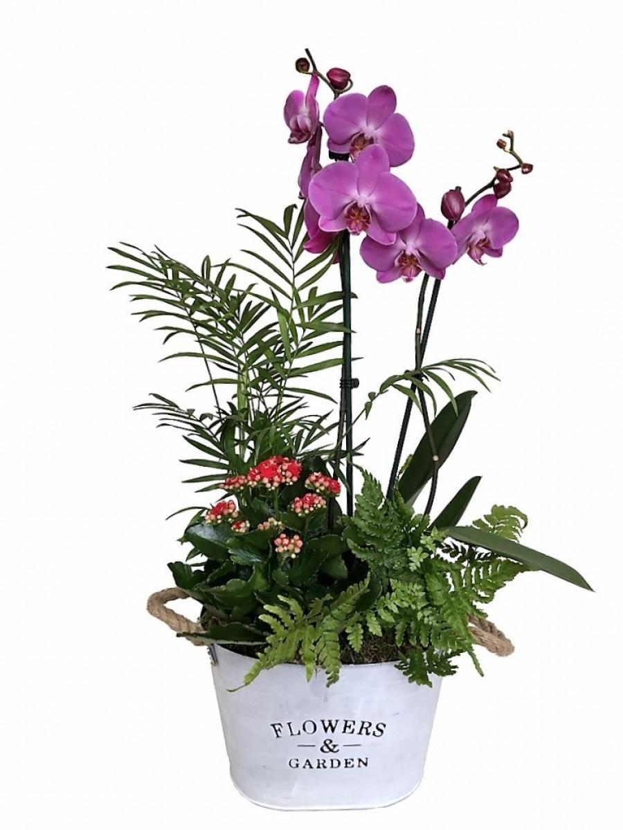 Orquídea morada con plantas variadas en latón