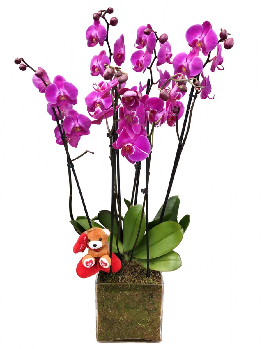 Orquídeas moradas San Valentín