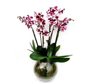 Centro orquideas con plantas variadas