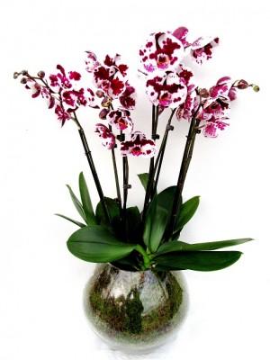 Centro orquideas