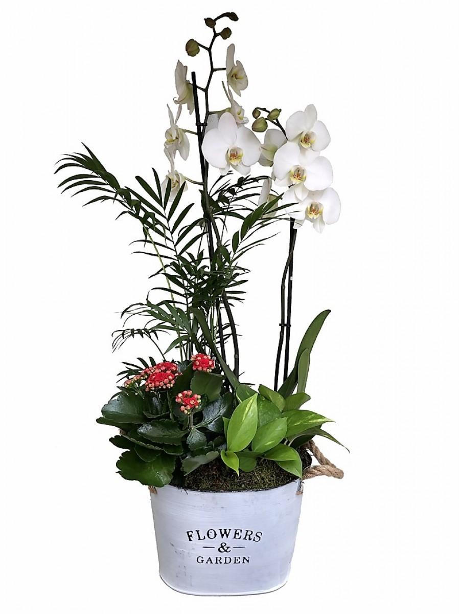 Orquídea blanca con plantas variadas en latón