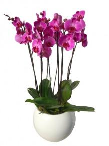 Centro orquideas moradas cristal blanco