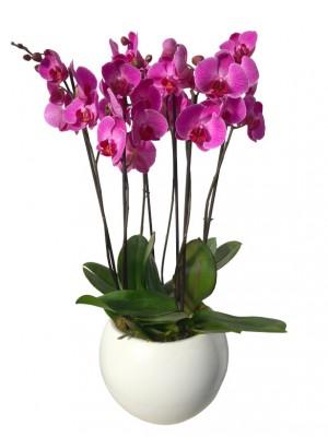 Centro orquideas moradas ceramica blanca