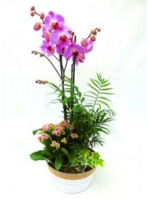Orquidea con plantas variadas
