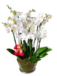 Centro de 5 orquideas San Valentin