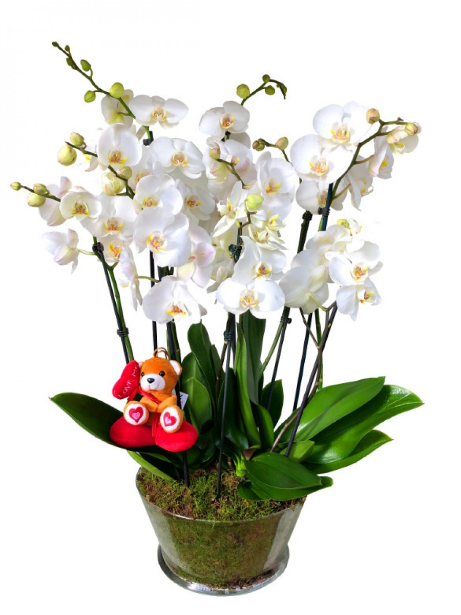 Centro de 5 orquídeas San Valentín