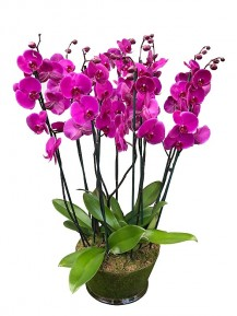 Centro de 5 orquideas moradas de 2 varas en cristal