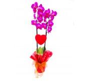 orquidea 2 varas san valentin
