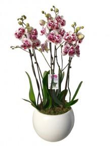 Centro orquideas ceramica blanca