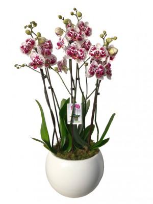 Centro orquídeas cerámica blanca