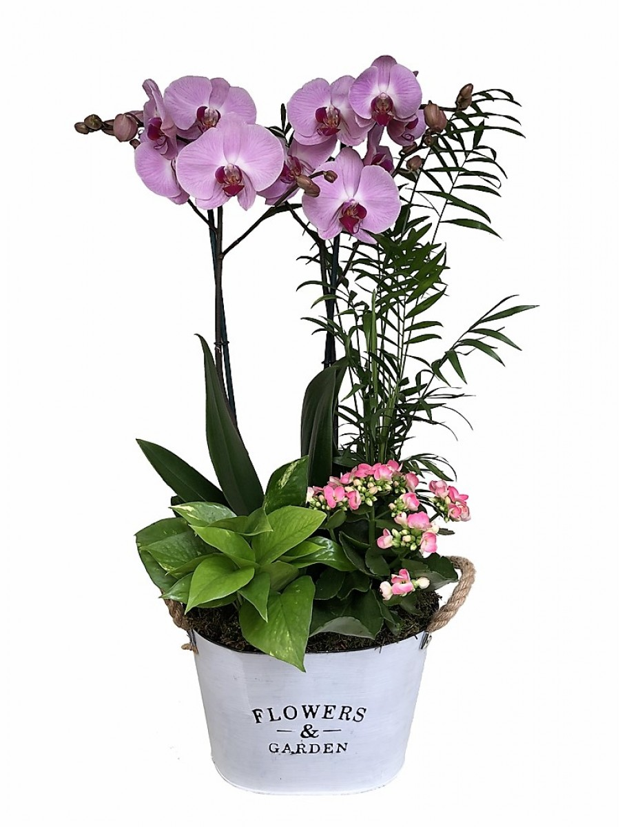 Orquídea rosa con plantas variadas en latón