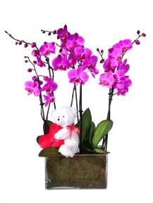 Orquideas Moradas San Valentin
