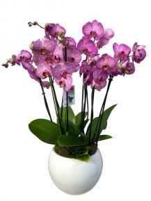 Centro orquideas rosa ceramica blanca