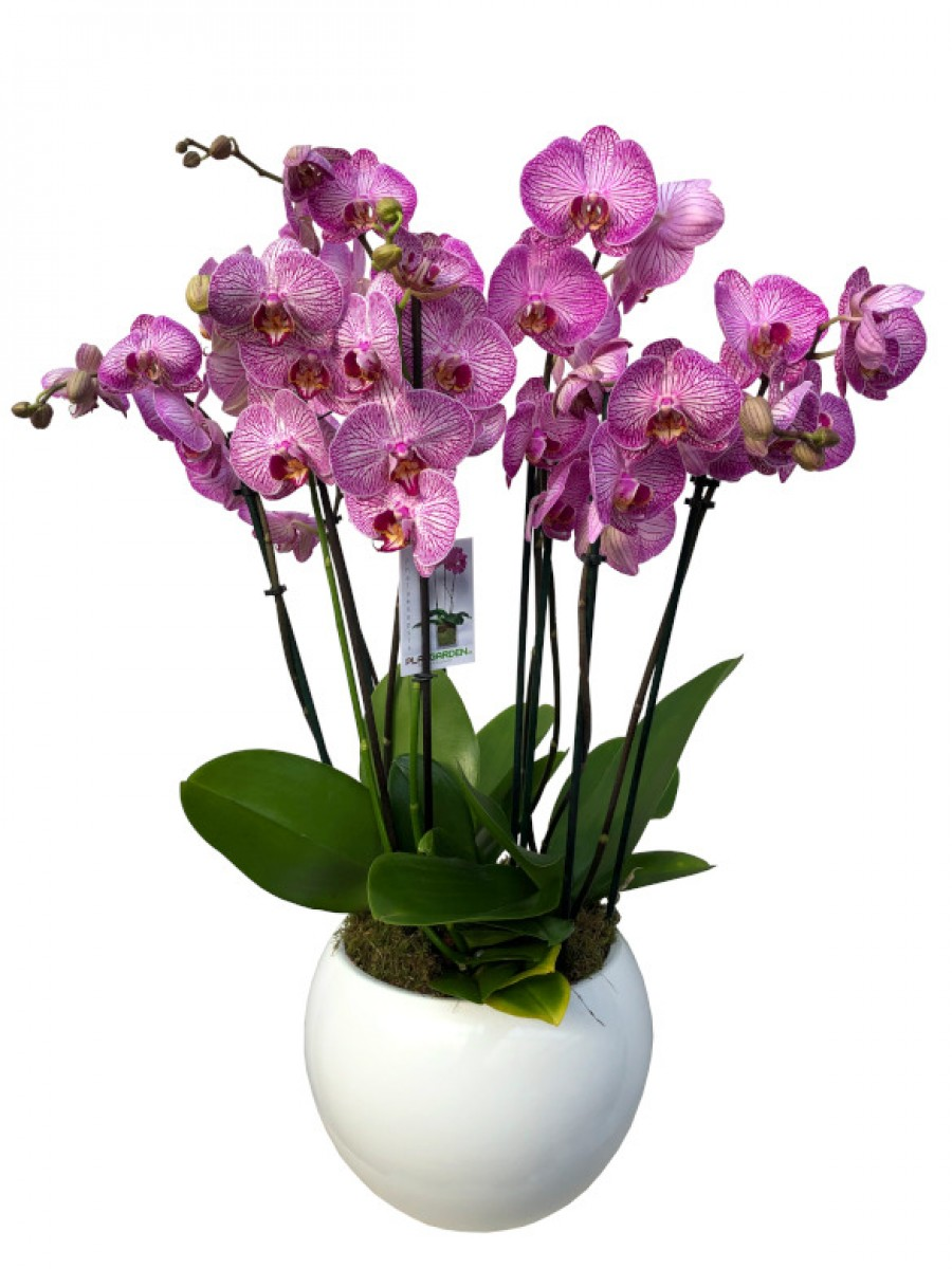 Centro de orquídeas rosas en cerámica