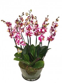 orquideas espectaculares en vaso cristal