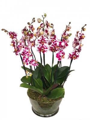 Orquídeas espectaculares en cristal