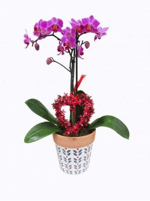 01 Cesta san Valentin orquidea morada