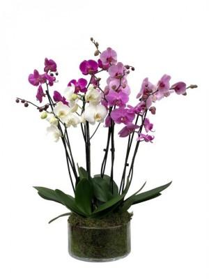 Centro de orquídeas multicolor en cristal
