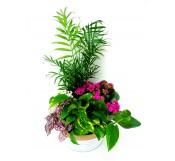 Centro de plantas variadas en laton