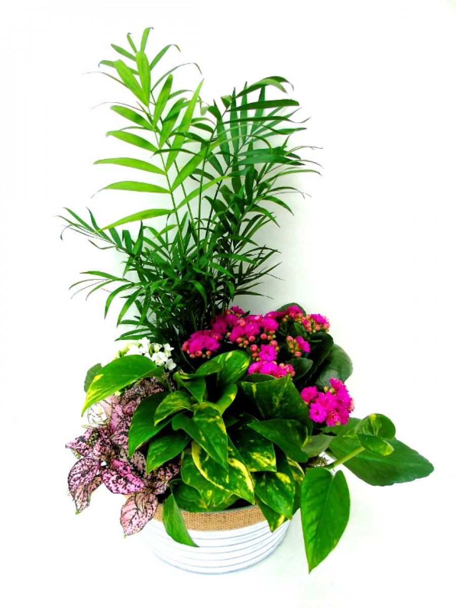 Centro de plantas variadas en latón