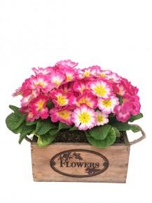 Primula en caja de madera