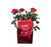 Rosal en maceta decorada San Valentin