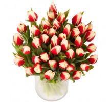 1 Jarron de 40 tulipanes bicolor