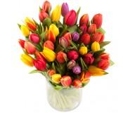 1 Jarron de 40 tulipanes variados