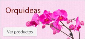 Centros de Orquideas